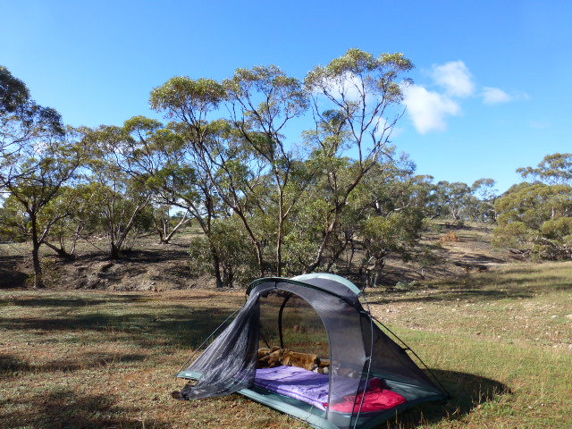 My tent outside Blinman in the Flinders Ranges